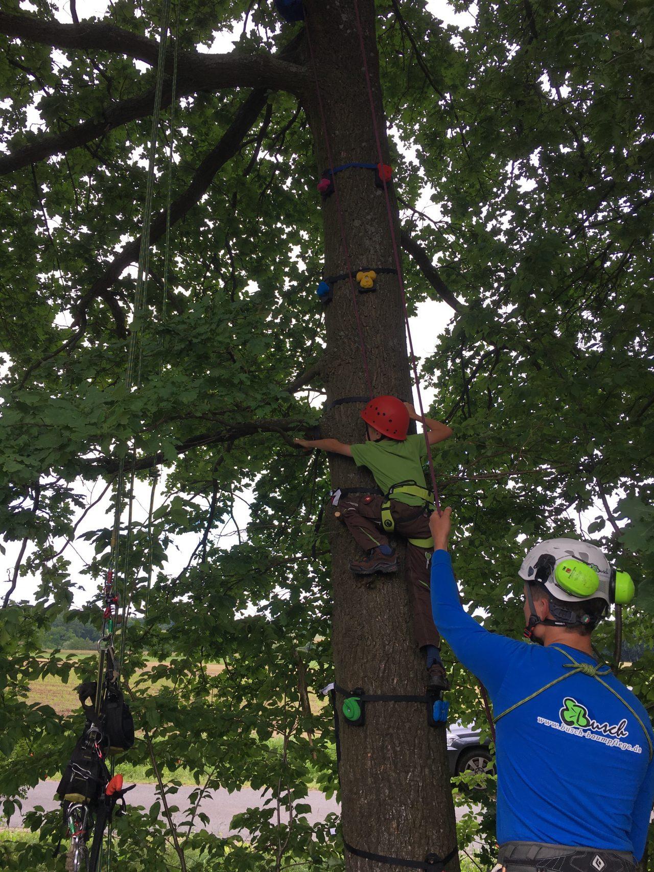 Baumklettern mit Tree Monkey Klettergriffen - Busch Baumpflege