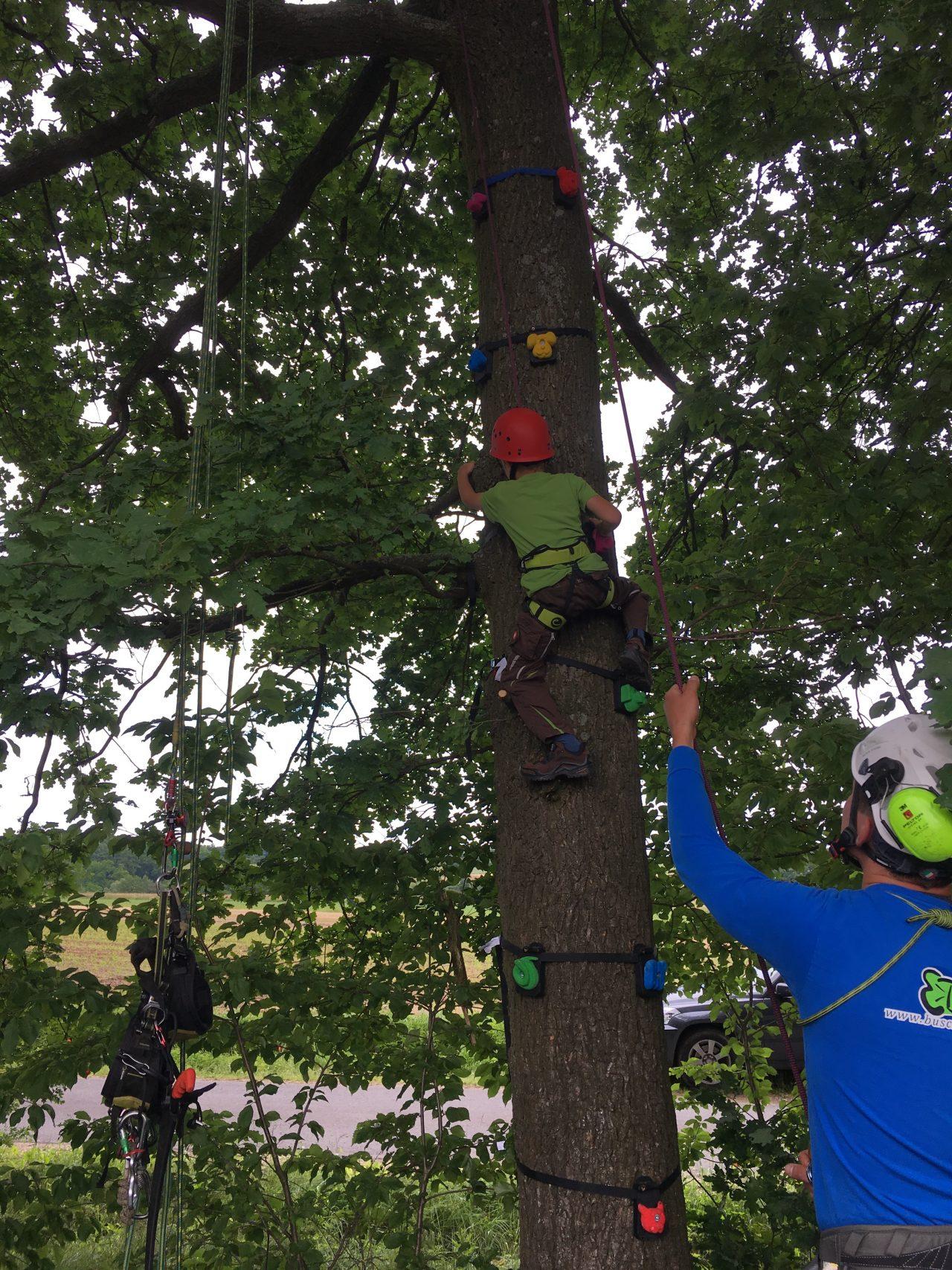 Kinderklettern mit Tree Monkey Klettergriffen - Busch Baumpflege