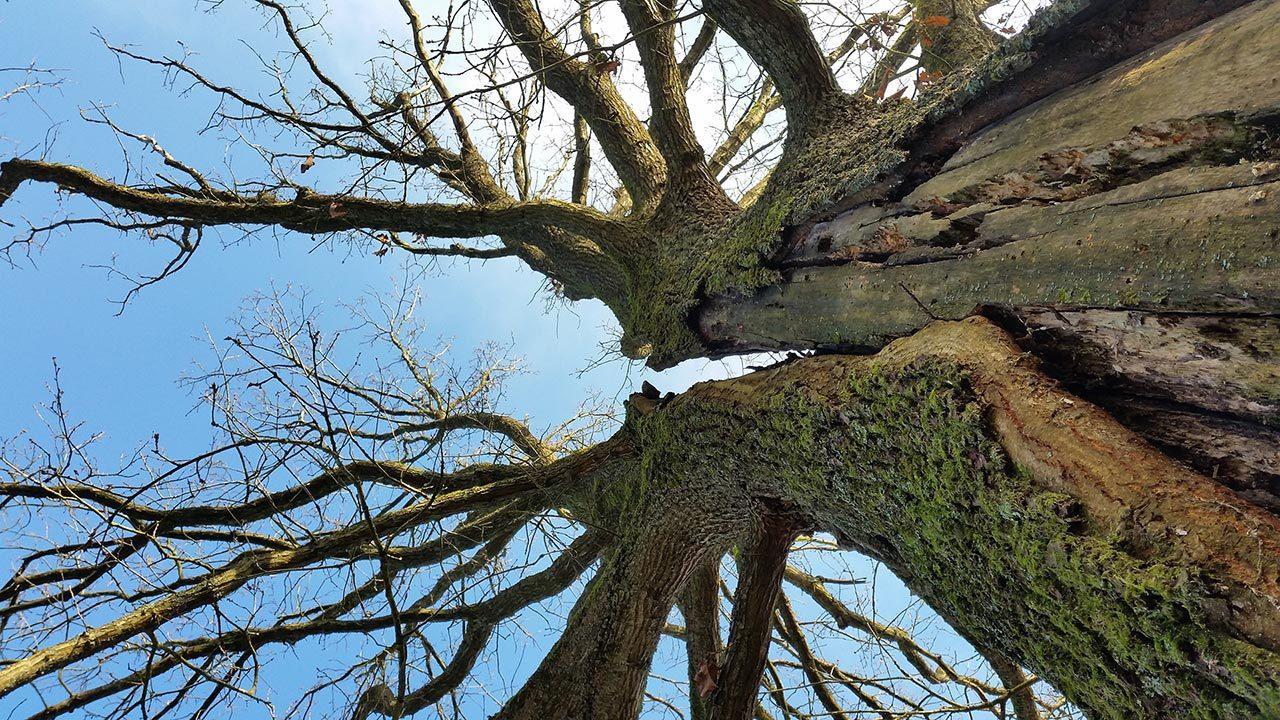 Baumkontrolle bei Busch Baumpflege