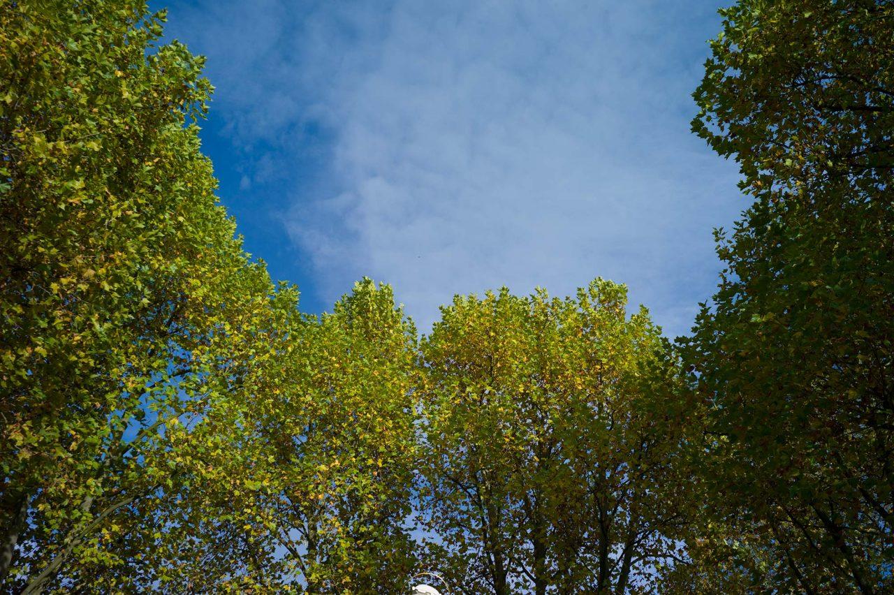 Baumpflege bei Busch Baumpflege