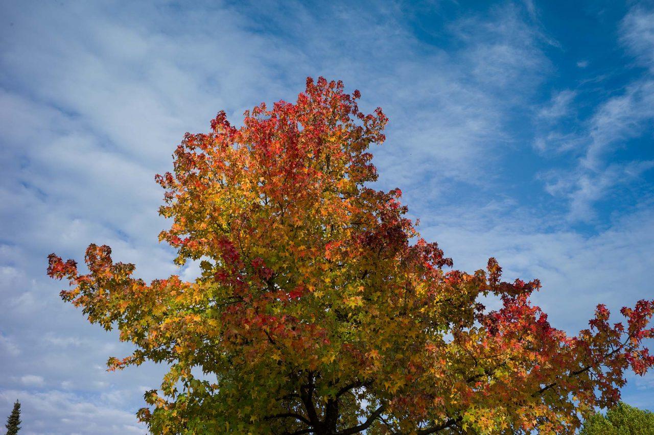 Pflanzung bei Busch Baumpflege