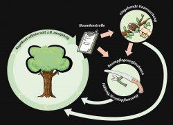 Baumkontrolle Verkehrssicherungspflicht Verkehrssicherheit von Bäumen