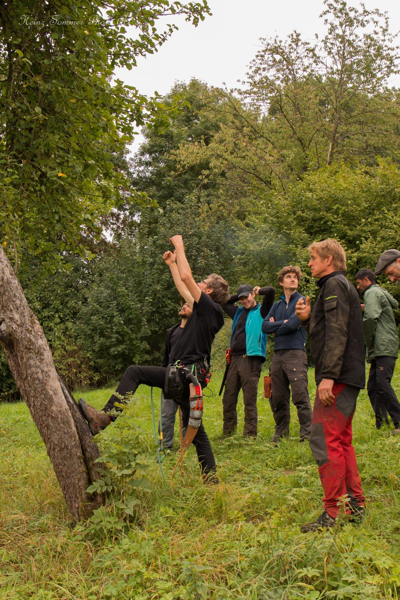 Baumkletterwochenende in Buttenheim Obstbaumschnitt mit Kai Bergengrün - Busch Baumpflege
