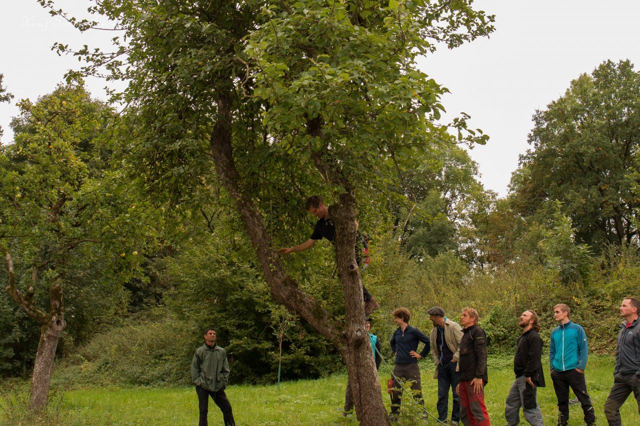 Baumkletterwochenende mit Kai Bergengrün in Buttenheim
