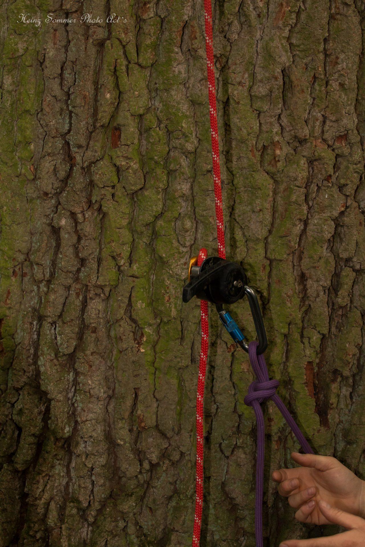 Petzel Rig zum ablassen des Aufstiegsseiles - Busch Baumpflege