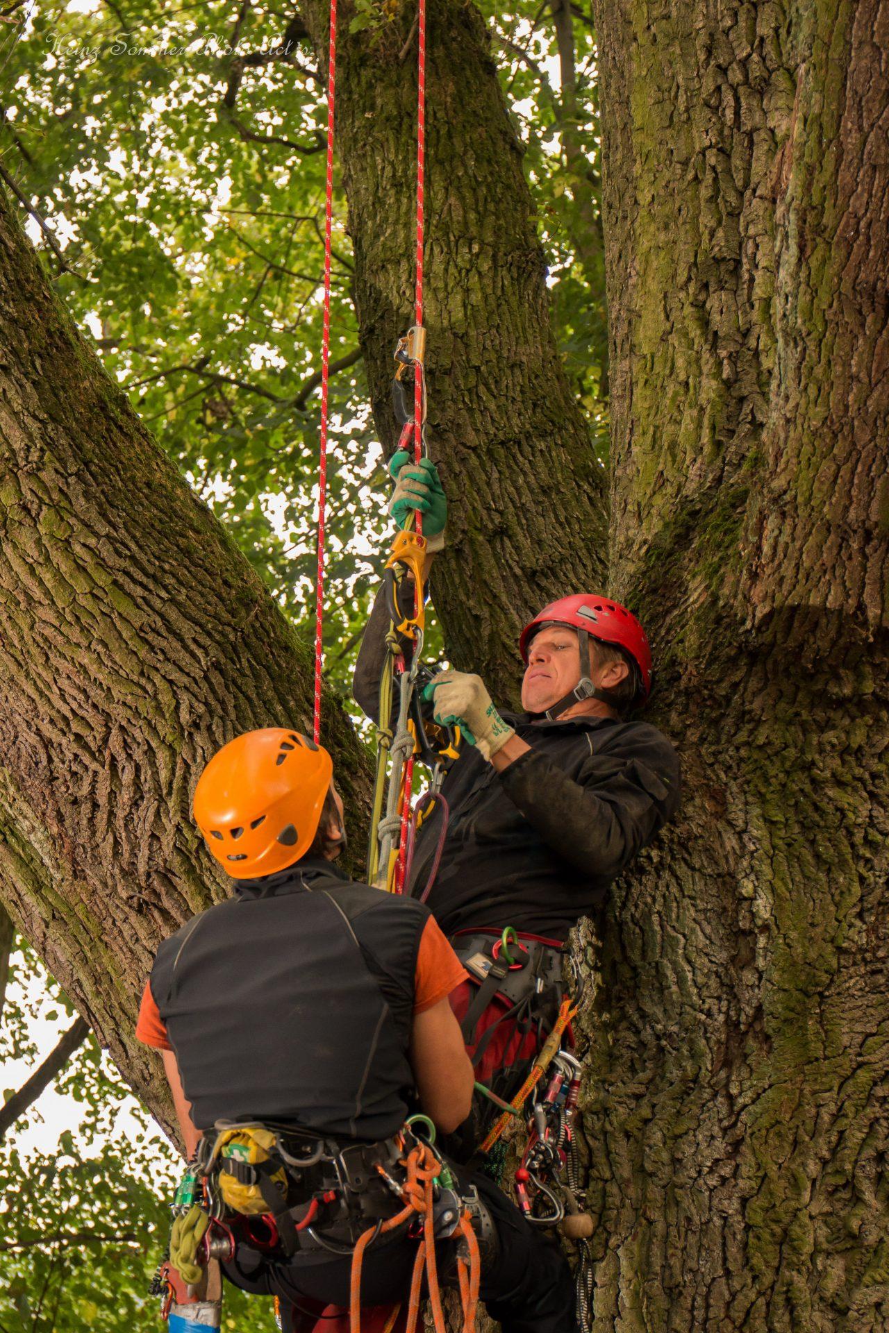 Rettung aus dem Aufstiegsseil beim Baumkletterwochenende mit Rettungsübung - Busch Baumpflege