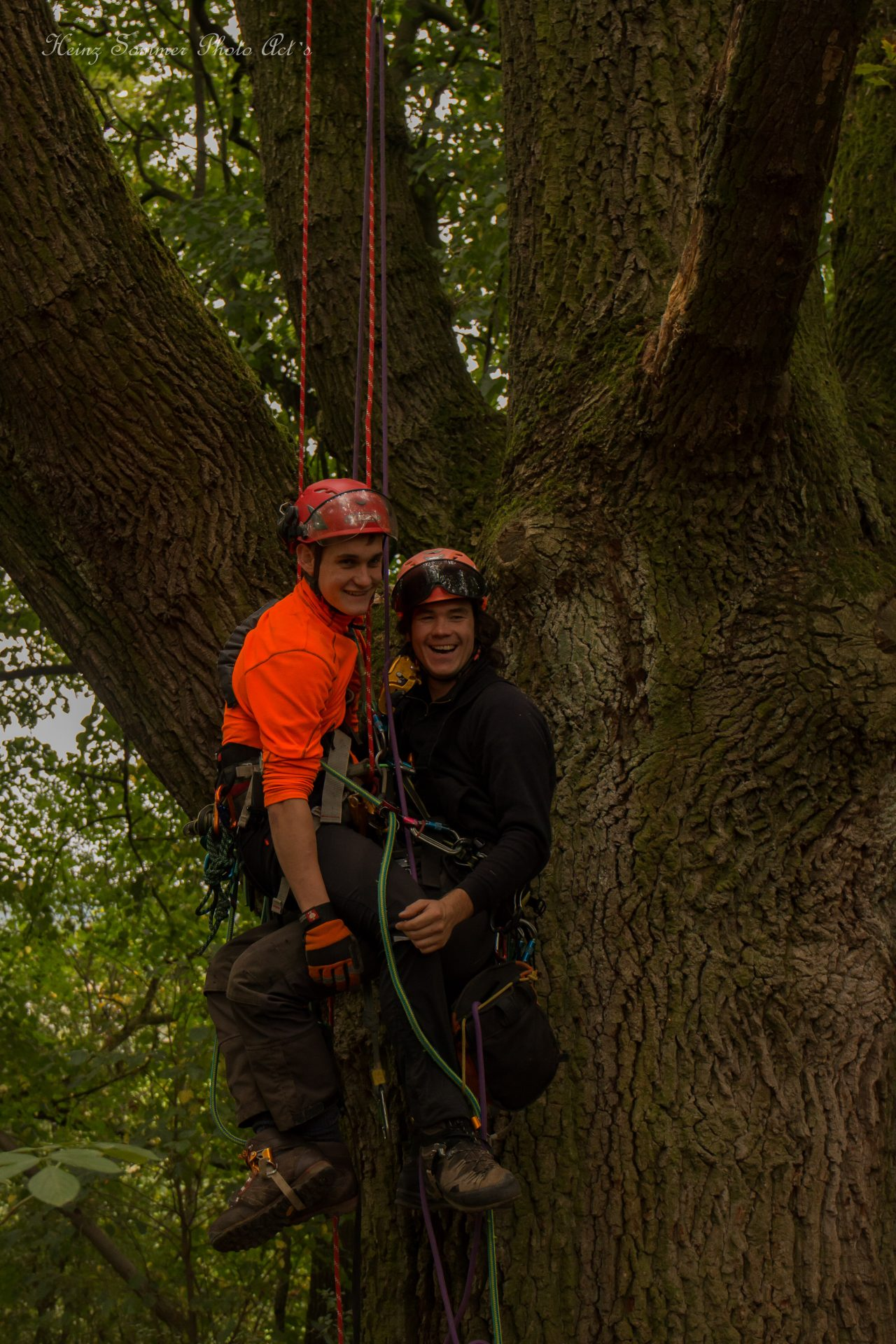 Rettung aus dem Aufstiegsseil beim Baumkletterwochenende mit Rettungsübung - Busch