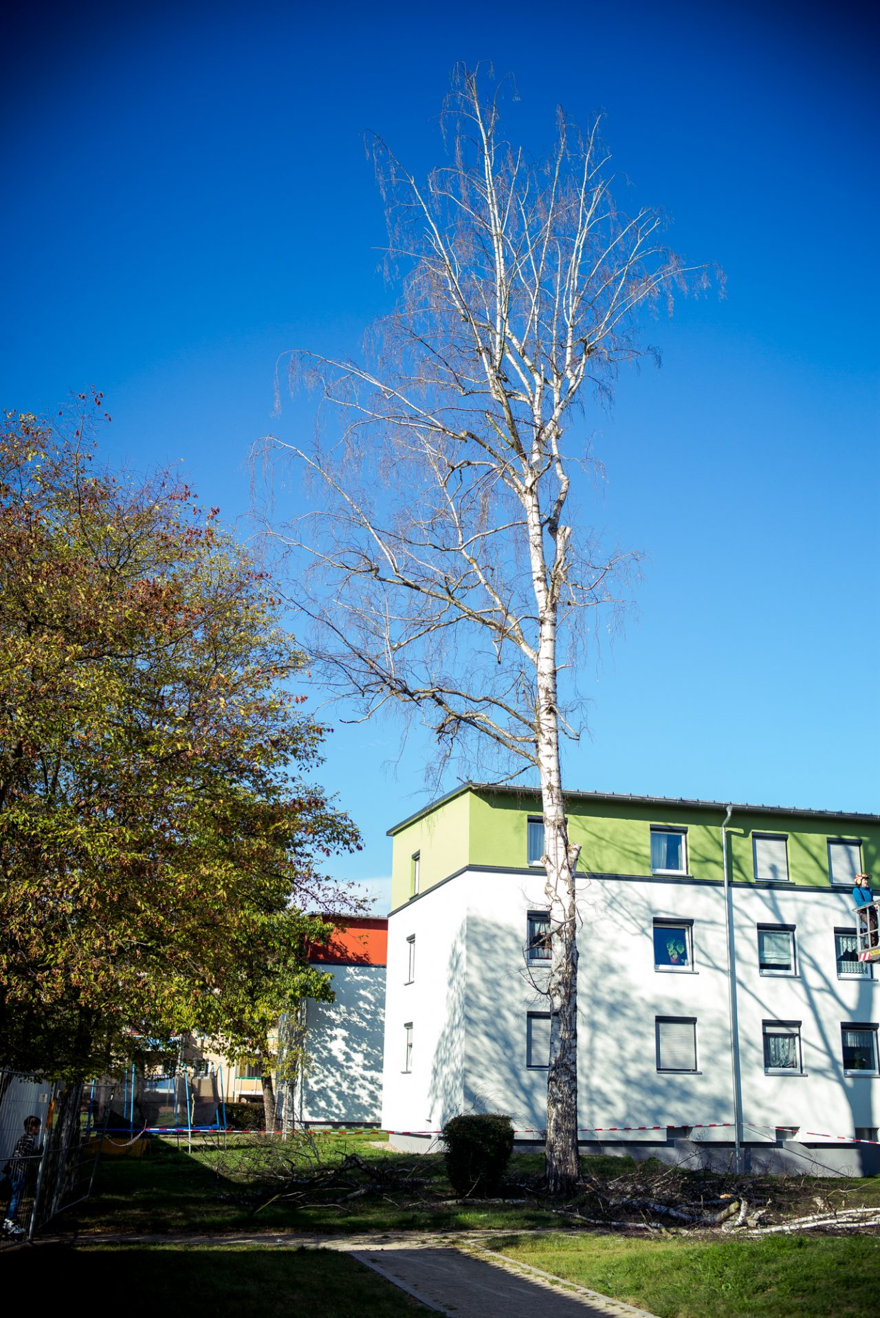 Baumfällung einer Birke in Forchheim - Busch Baumpflege