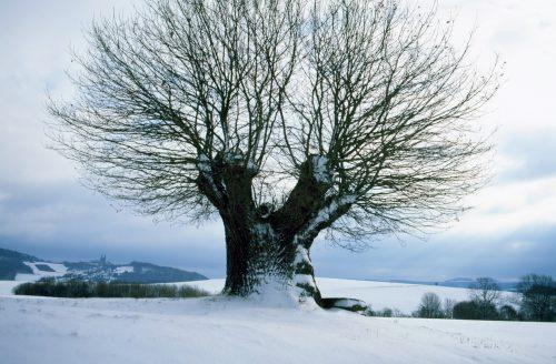 Hüter des Feldes, Busch Baumpflege