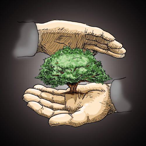 Baumschutzverordnung Busch Baumpflege
