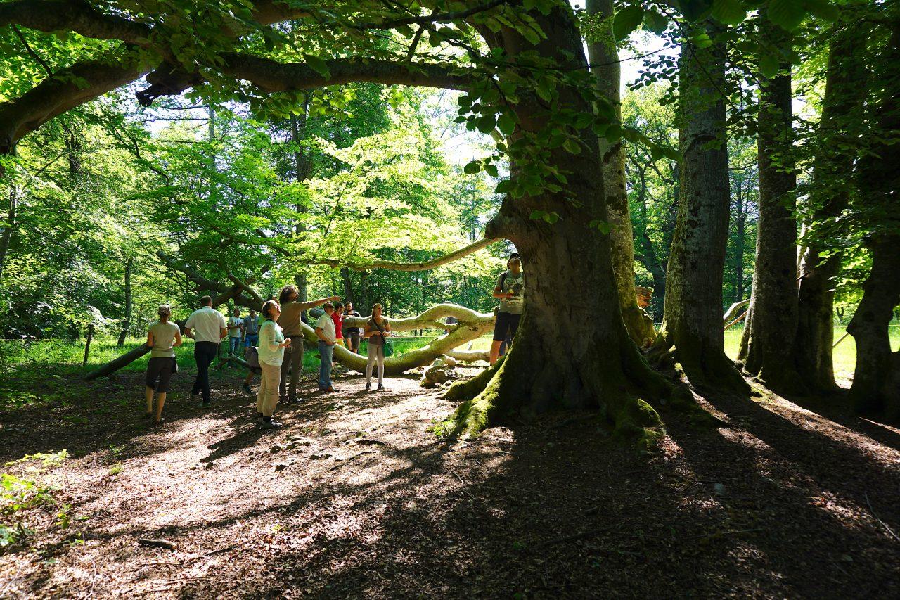 Seminar Artenschutz an Bäumen